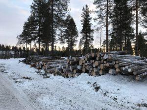 Stora mängder träd har fällts vintern 2016-17.