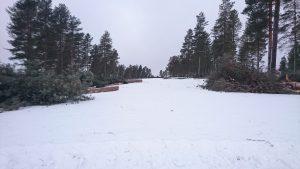 Björnen #1. 2017-02-01.