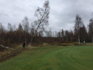 Fällning av träd på Björnen #5. 22 september 2016.