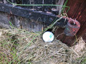 Stilleben: Golfboll på väg in i lada.